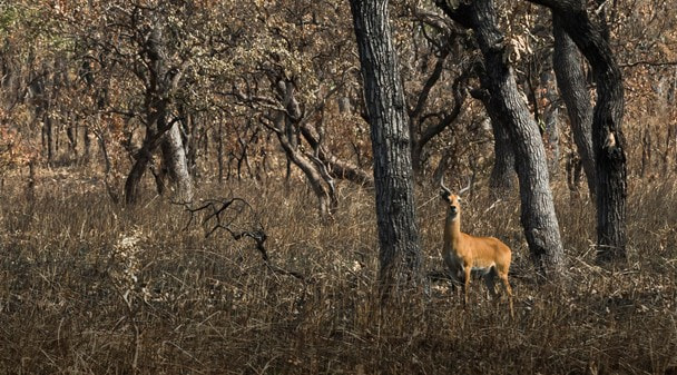 Основной Инстинкт: Охота в Камеруне. Часть 3